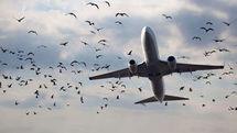 ادامه موج لغو پروازها به کردستان عراق