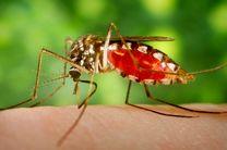 تشخیص سریع و دقیق، کلید مدیریت مالاریاست