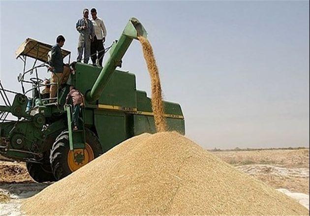 فروش گندم به صورت خرید تضمینی در استان انجام میشود