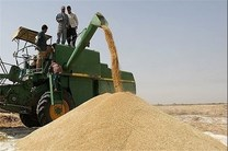 خرید تضمینی گندم به مرز ۹ میلیون تن رسید