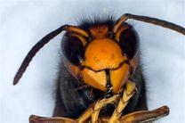 نیش نانو زنبور برای درمان سرطان و ایدز