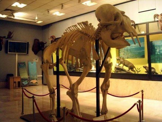 بازدید از موزه تنوع زیستی اول خرداد رایگان است