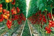 میزان گلخانه رها شده در همدان «هیچ» است/ سال های طلایی گلخانه در راه است