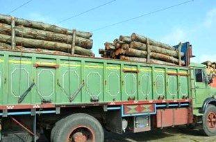 کشف 3 تن چوب جنگلی قاچاق در سوادکوه