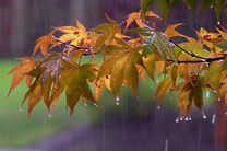 هوای قم از امروز تا فردا صبح بارانی است