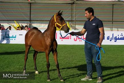 پنجمین جشنواره ملی اسب اصیل کرد