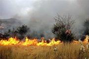 بی احتیاطی گردشگران، آتش حریق را به جان 2 هکتار سایت پرورش آهو انداخت