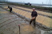 نخستین بذرپاشی برنج در میاندورود انجام شد