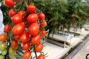 ساخت بزرگترین گلخانه یکپارچه غرب کشور در استان کرمانشاه