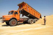 خرید گندم در آذربایجان غربی آغاز شد